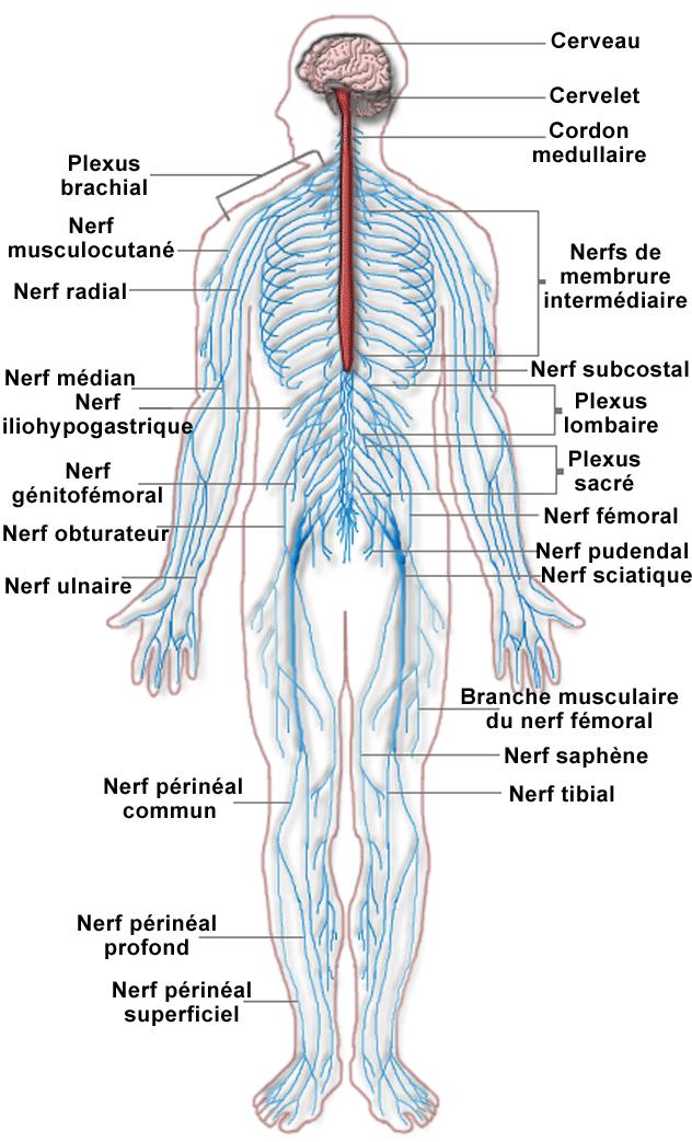 arterial arthritis