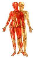 Human Tissue System